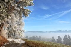 frostfarben